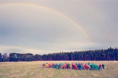 Image: Rainbow sheep