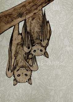 Little Flying Foxes by Leigh Ann Sammis