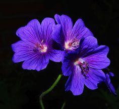 flower-812731_960_720.jpg (789×720)