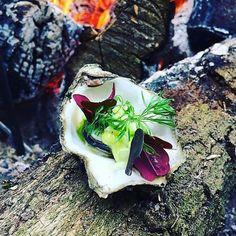 Grillet østers med dildmayo, agurk, tangaske og skovsyre