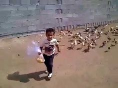 [SO FUNNY] Little boy getting chased by hungry chickens