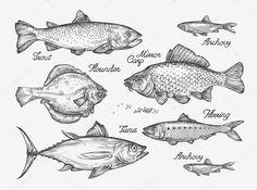 Descargar - Peces dibujados a mano. Esbozo de trucha, carpa, atún, arenque, lenguado, anchoa. Ilustración de vector — Ilustración de stock #120017960
