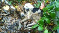Женщина нашла в куче мусора еле живое существо