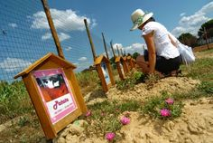 Buongiorno Link: A Scandicci il cimitero per animali domestici