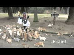Rabbit Stampede (Original) - Woman Chased By Hundreds of Rabbits Rabbit Island, Japan