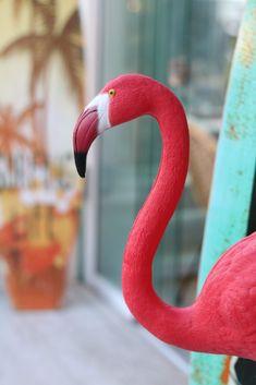 MALLORCA - co tam vidět? A co jsme tam stihli a nestihli za 5 dní Flamingo Decor, Wanderland, Rabbit, Decoration, Blog, Dekoration, Rabbits, Decorations, Deco