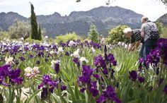 Benissa alberga el jardín de lirios más grande de España