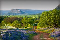 Willow City Loop in Spring. (Gillespie County) One of the best places in Texas to see the wild flowers