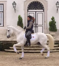 Bridle less dressage, absolutely incredible All The Pretty Horses, Beautiful Horses, Animals Beautiful, Horse Photos, Horse Pictures, Dressage Horses, Dressage Bridle, Andalusian Horse, Horse Riding