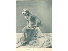 Owney the famous postal dog.