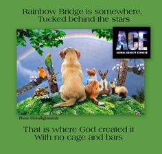 SPIRITUALITY. Please join our fight to save animals all over the globe! Feel free to take and use ACE created images to further promote awareness! Thank you! Our main page: Animal Cruelty Exposed http://www.facebook.com/pages/Animal-Cruelty-Exposed/363725540304160