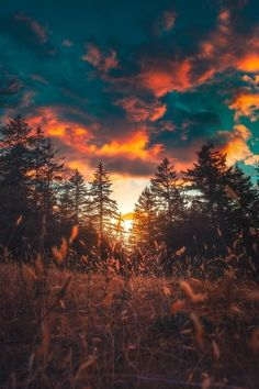 "Fire in the Skies calibreus"" - Berable Beautiful Nature Pictures, Nature Photos, Pretty Pictures, Beautiful Landscapes, Calming Pictures, Nature Nature, Amazing Nature, Mother Nature, Amazing Photography"
