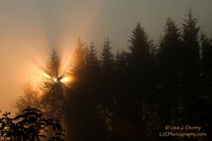 Sunrise Through Early Morning Fog - Photograph at BetterPhoto.com
