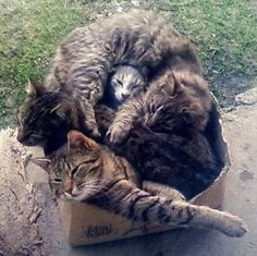 An example of a cat storage box overly stuffed with cats