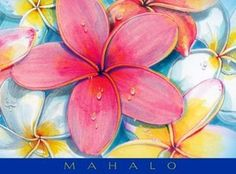 Hawaiian Thank You Cards Boxed Mahalo Plumeria #2