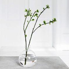 Minimalistisch, Styling, Vase, Ast