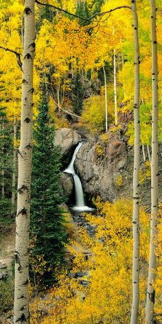 Fall Colors - Nellie Creek Falls, Colorado -- David Kingham Photography Love Birch trees.
