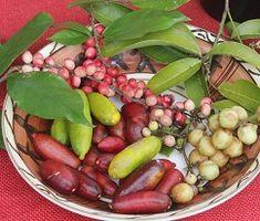 Bush Tucker  Australian Plants   Unique Foods - statement of attainment