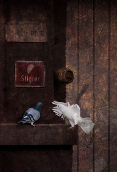 The birds around me - 收藏集 - Google+