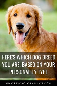 Which dog breed fits your MBTI type best? Find out which dog breed has the most in common with your personality type. Infp Personality Type, What Dogs, Types Of Dogs, Brown Dog, Love Pet, Homemade Dog, Beautiful Dogs, Shih Tzu, Spirit Animal