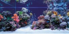 Do you have a boring fish tank and want to decorate it? There are many people who have a fish tank o