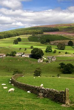 Yorkshire Dales, England KB: My beloved Yorkshire. So, so pretty. Yorkshire Dales, Yorkshire England, North Yorkshire, British Countryside, England And Scotland, Country Life, Beautiful Landscapes, Wonders Of The World, Places To See