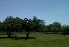 Park in Kenilworth NJ where I use to walk every lunchtime
