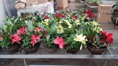 $39.95 Christmas planters