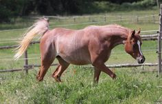 131 Best Horse Color Galore Rabicano Images In 2019