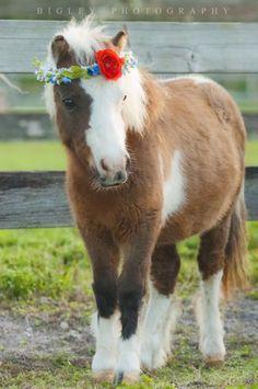 flower garland horse