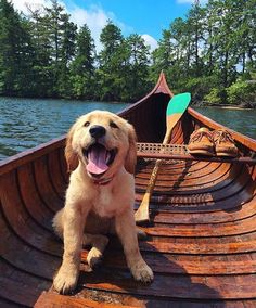 Golden retriever pup AND a cedar canoe? Sign me up! Golden retriever pup AND a cedar canoe? Sign me up! Perros Golden Retriever, Chien Golden Retriever, Animals And Pets, Baby Animals, Funny Animals, Cute Animals, Animal Memes, Animal Pictures, Cute Puppies