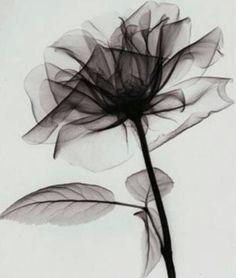 Flower, black & white.