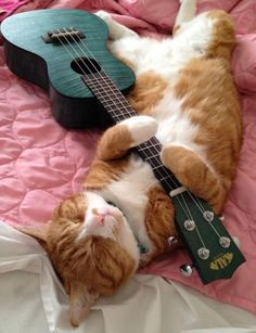 Kala Ukulele - Always Wanted To Learn Guitar? Cute Kittens, Funny Cats, Funny Animals, Cute Animals, Animals Images, Crazy Cat Lady, Crazy Cats, I Love Cats, Cool Cats
