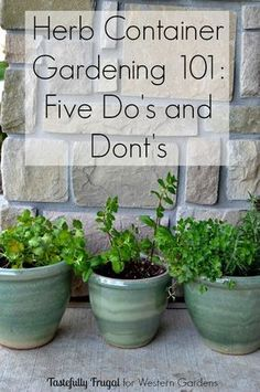 Herbs Gardening Want to start an herb garden? Here are 5 Dos and Don'ts to help get you started! - 5 Dos and Don't for Planting Herbs. Simple advice to help your container herb garden thrive so you can have fresh herbs any time for any recipe or dish! Container Herb Garden, Garden Plants, Terrace Garden, Garden Edging, Shade Garden, Compost Container, Garden Art, Garden Tools, Pots For Plants