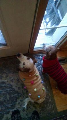 Cute dachshund sweaters