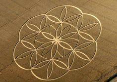 The truth about crop circles Sacred geometry Geometric Trees, Geometric Mandala, Geometric Shapes, Geometric Symbols, Geometric Designs, Crop Circles, Mandala Art, Lottus Tattoo, Tattoo Fleur