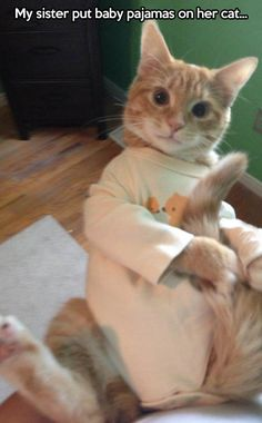 Cat in pajamas… this made me laugh… I would not be able to get my cat into pajamas without being severely injured….