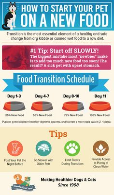 It is important that your pet switch dog food gradually from his current dog food to avoid digestive upset or tummy trouble https://www.rawpetfood.com/raw-dog-food-feeding-guidelines