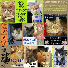 All these males are in desperate need of rescue or adoption, if you're interested or think you can help, then please contact Hawkesbury Pound. Their details are on this collage.