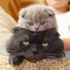 Caption this!  Don't forget to like & share! #CaptionThis #FunnyCats Just Love Cats