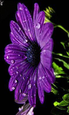 Jada🌿__Gif Paradise t Flowers Gif, Exotic Flowers, Amazing Flowers, Beautiful Roses, Purple Flowers, Purple Love, All Things Purple, Shades Of Purple, Flower Images