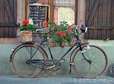 Bicicleta francesa velha
