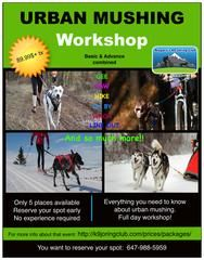 Urban Mushing Workshop, basic & advance combine