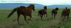 :      welshponies:      Run wild, run free      Third from the left: I'm not as fast so I'm just gonna' bite you.