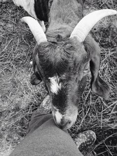 Farm life. #farm #goats