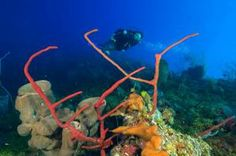 Research shows coral reefs worth saving