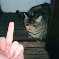 Kitties, dank memes, and sad: tsgoa sad kitty Sad Cat Meme, Cute Cat Memes, Funny Memes, Cute Cats, Funny Cats, Funny Animals, Cute Animals, Reaction Pictures, Funny Pictures