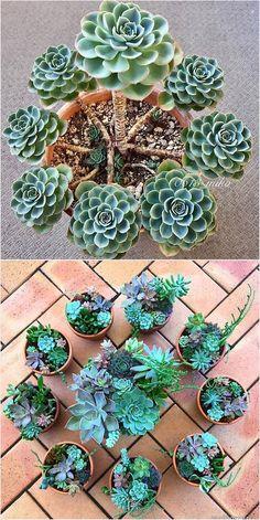 Gorgeous Succulent Container plants #thesucculentsource #succulent #succulents