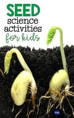 Seed Activities For Kids, Kindergarten Science Activities, Teaching Science, Teaching Ideas, Seeds Preschool, Kindergarten Assessment, Sequencing Activities, Science Experiments Kids, Science For Kids