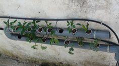 φυτα μεσα σε σωληνα - Αναζήτηση Google